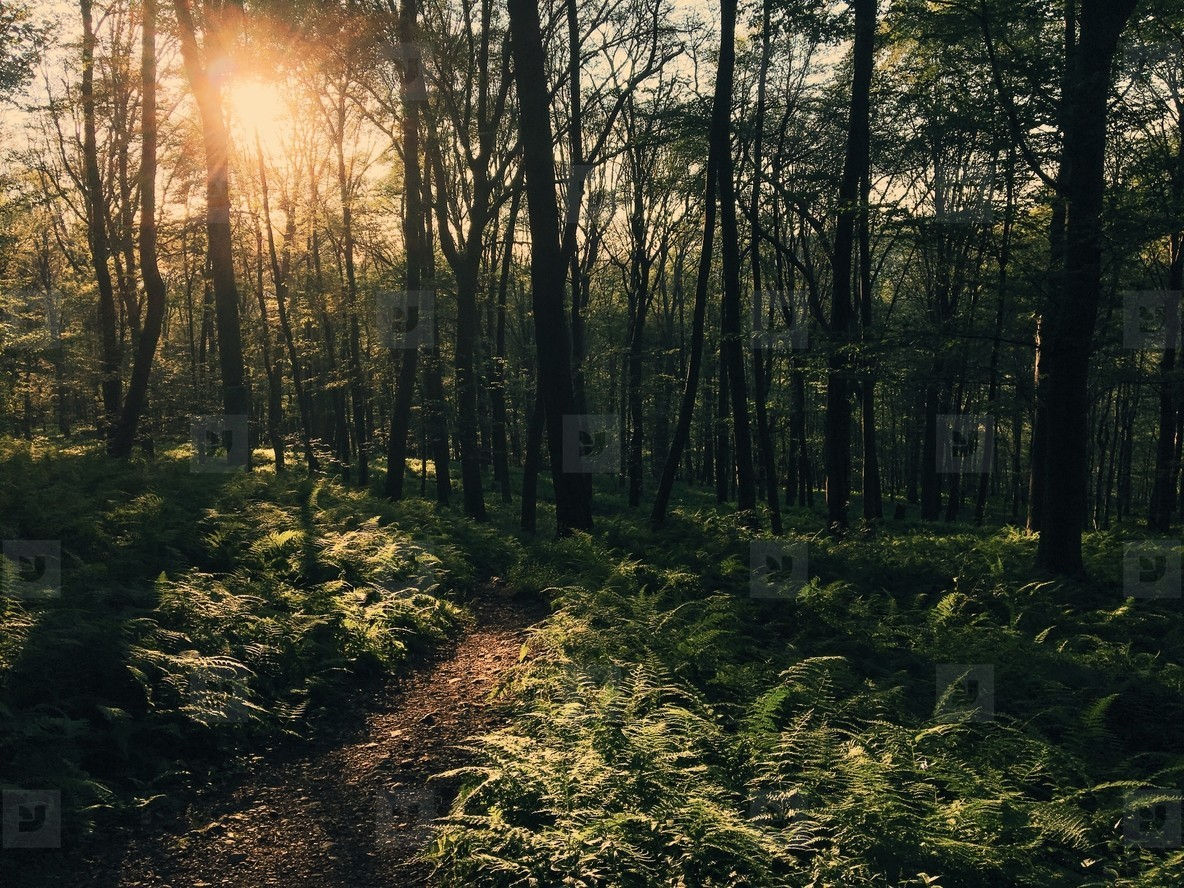 Trail at dusk