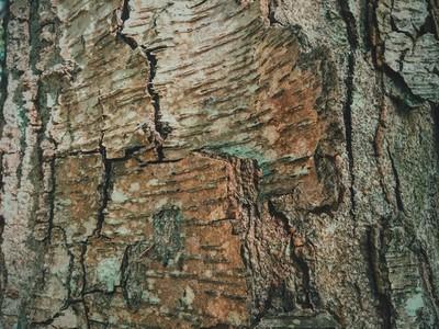 Gray bark