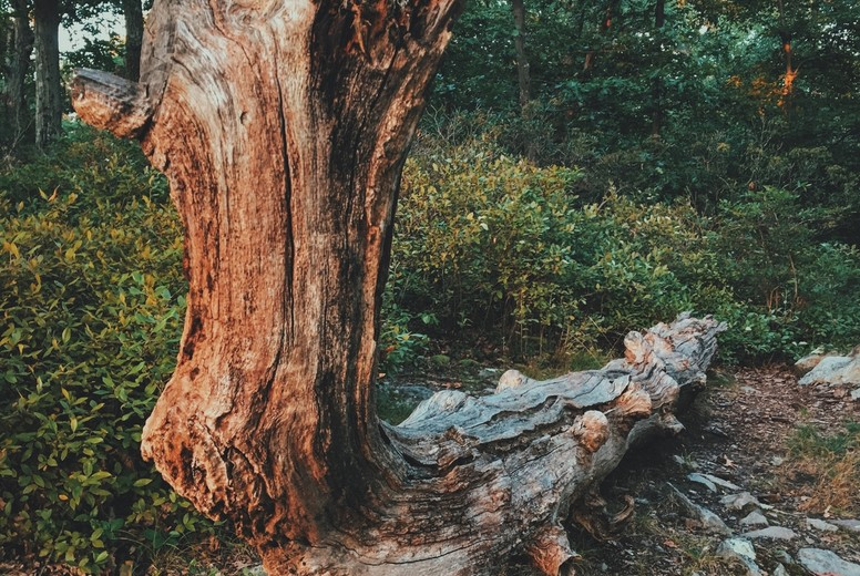 Sitting log
