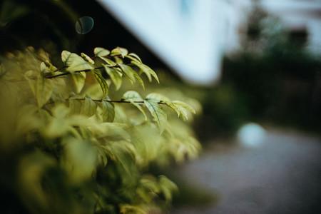 Plants 01