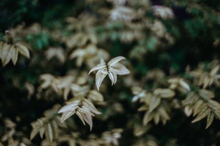 Plants 02