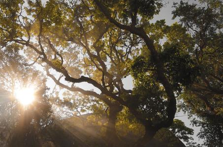 Sunbeams through tree branch