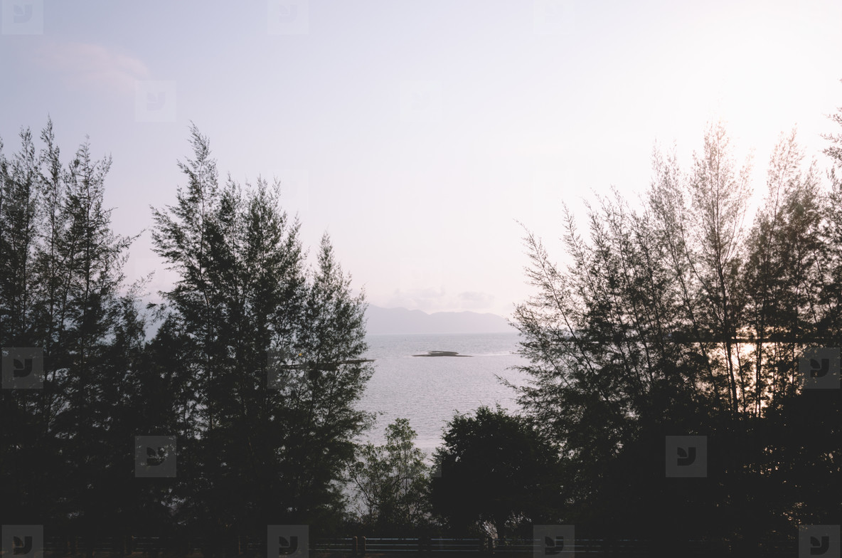 Ocean view through trees