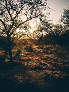 Sunset on the savannah