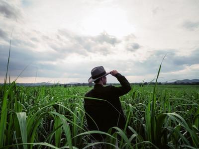 Farmland in Thailand