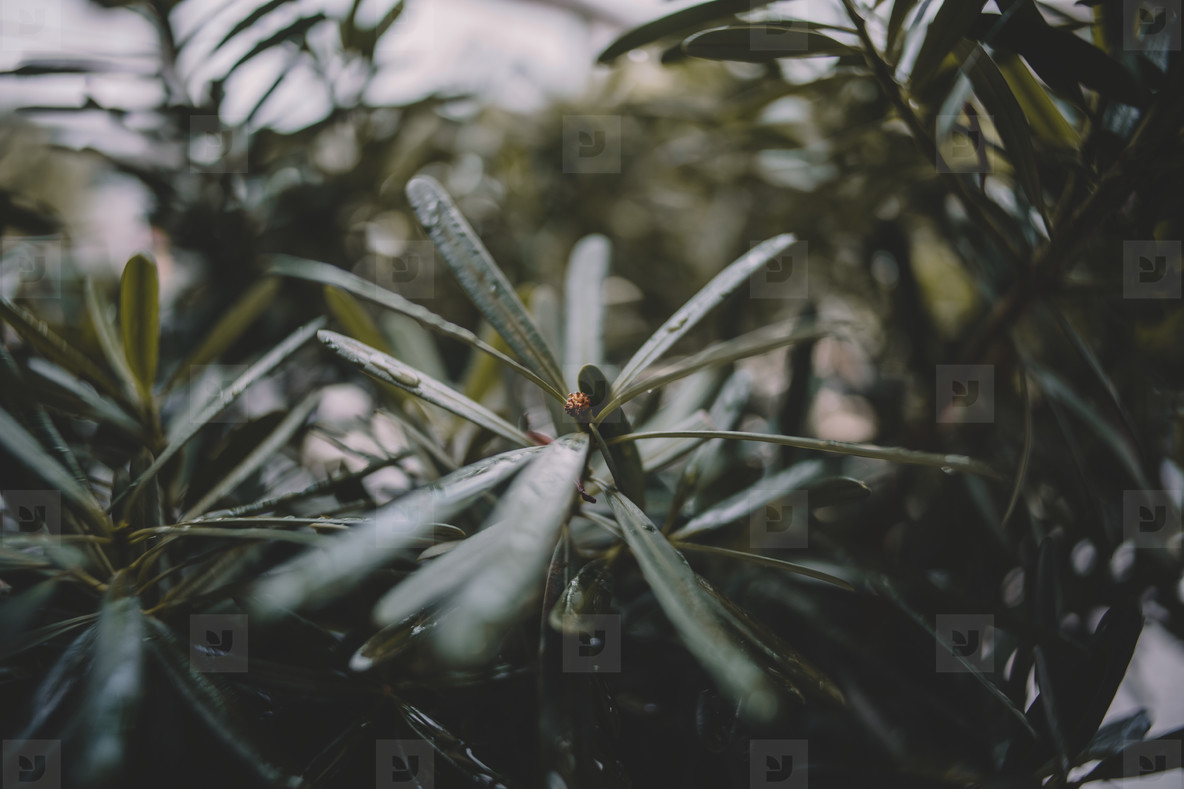 Rainy Plants