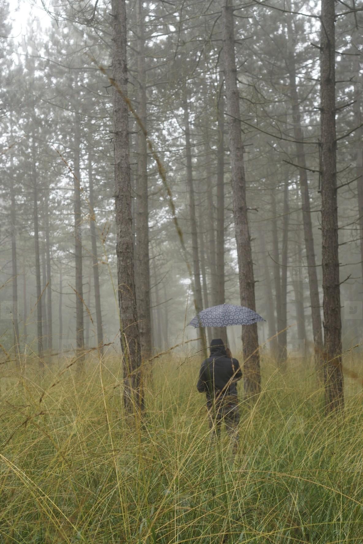 rainy forest walk