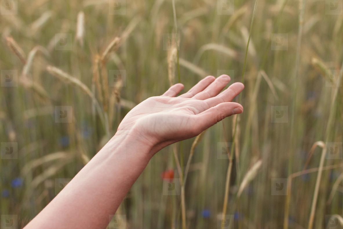 Splendour In The Grass  09