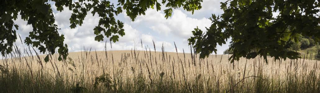 Splendour In The Grass 23