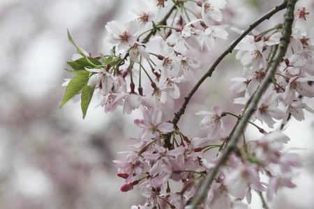 Travel Blossoms  15