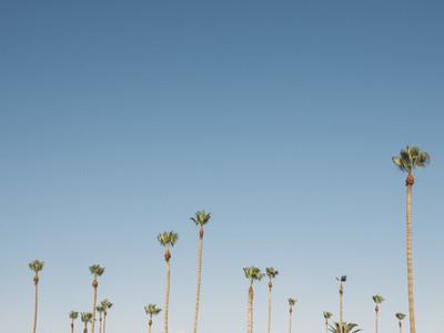 Landscape Architecture 09