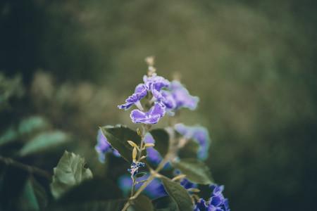 Dreamy Botanical 05