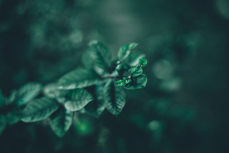 Dreamy Botanical 01