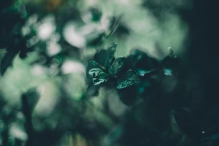 Dreamy Botanical 02