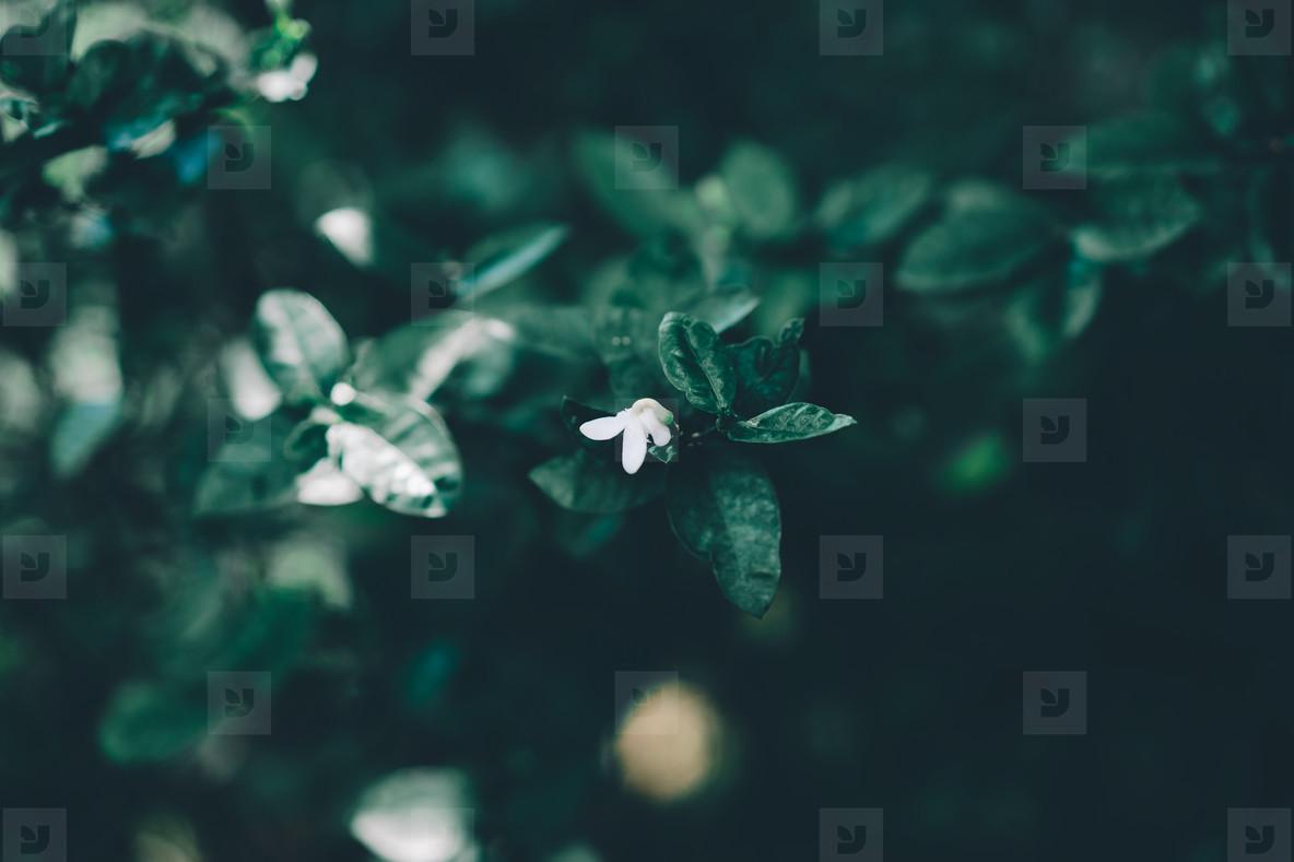 Dreamy Botanical 03