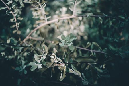 Dreamy Botanical 04