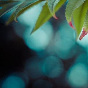 bokeh plant