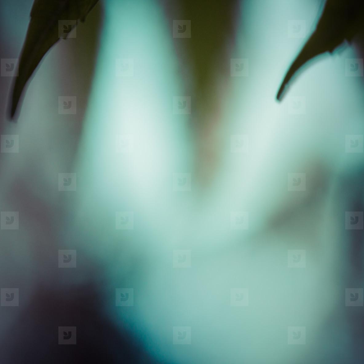 blurry plant