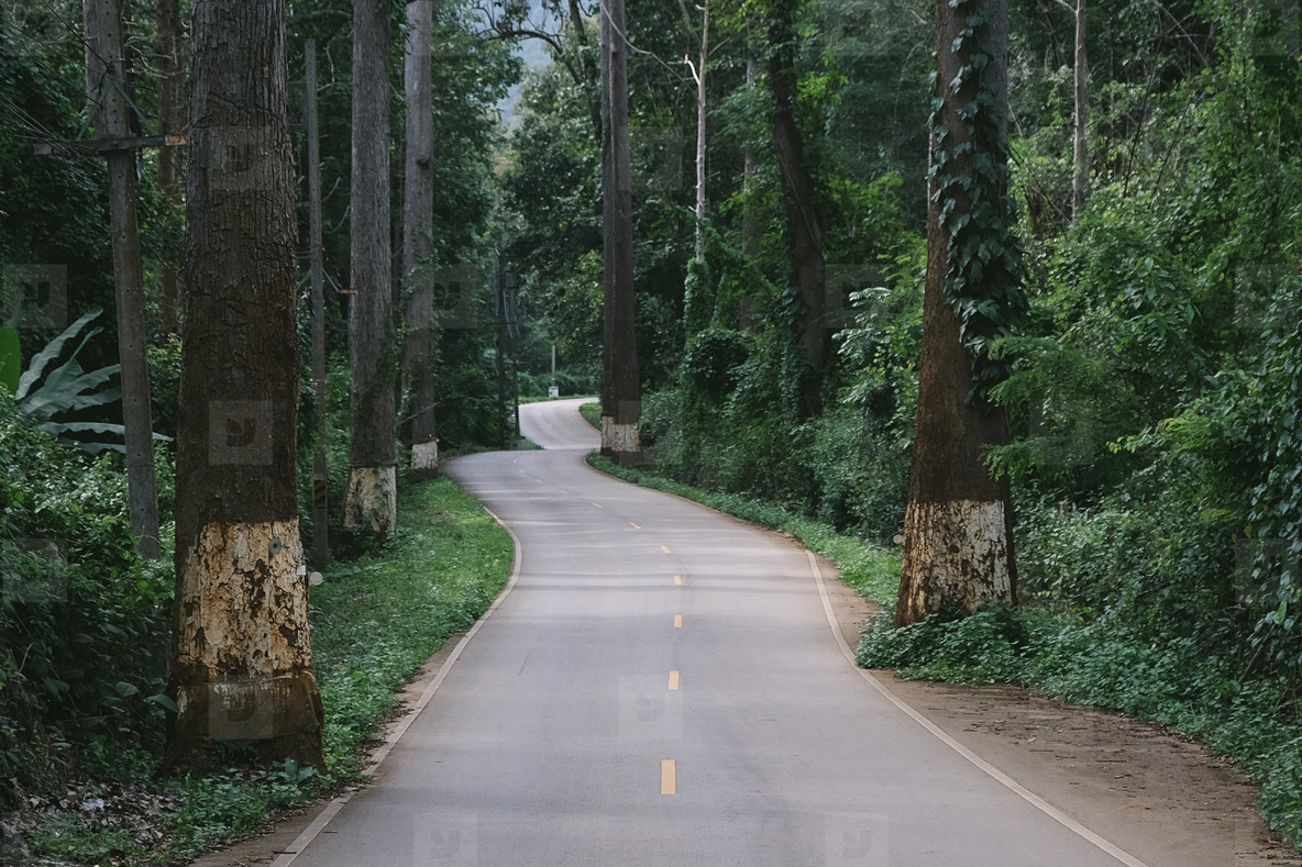 Asphalt road in green forest
