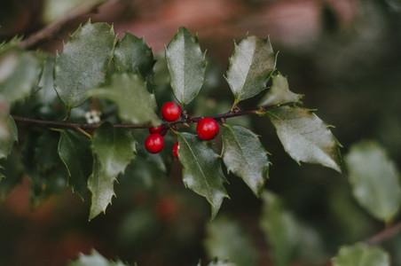 Winter Red