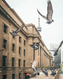 Birds in the city
