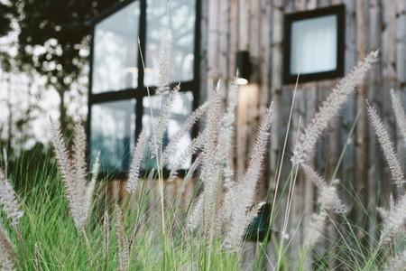 Reeds flower