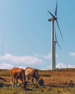 Ngong Hills wind 3