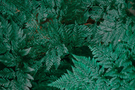 Botanical Leaves