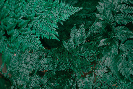 Botanical Leaves 2