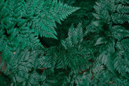 Botanical Leaves 2