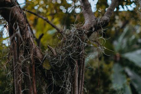 Botanical Garden 8