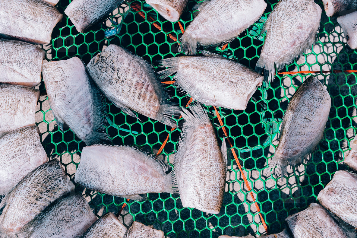 Fish Market 05