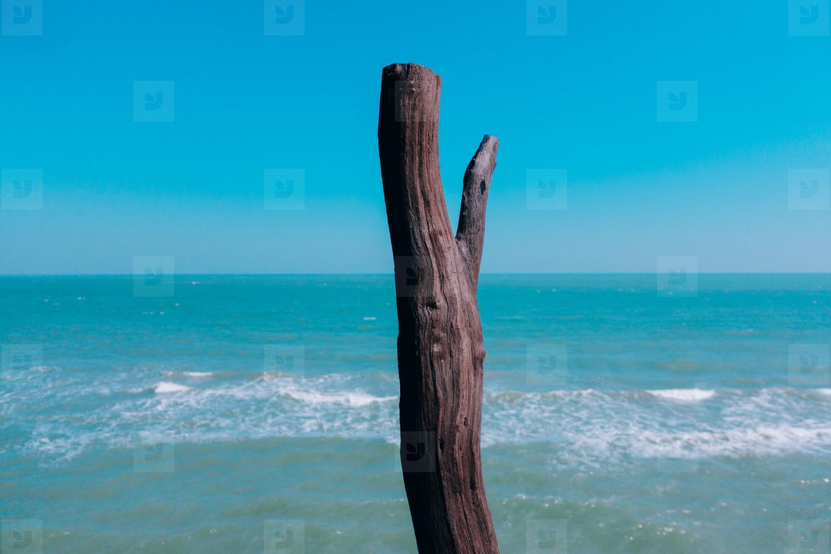 Beach Life 008