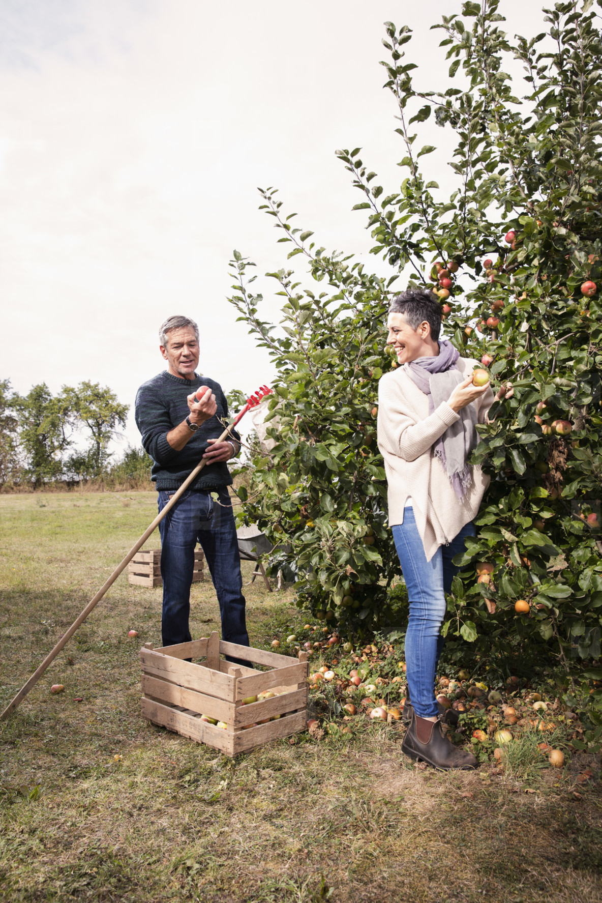 Weekend Harvest  01