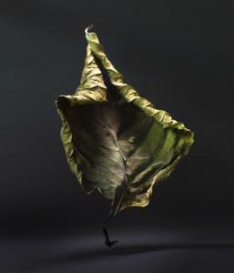 Dancing Leaves 01
