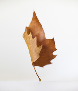 Dancing Leaves 05