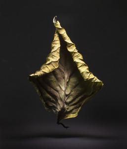 Dancing Leaves 08
