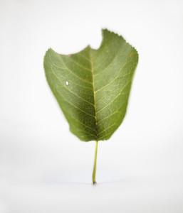 Dancing Leaves 10