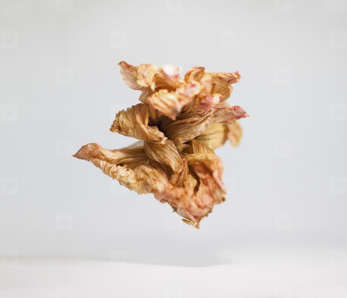 Dancing Leaves  16