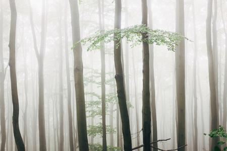 Misty Field 11