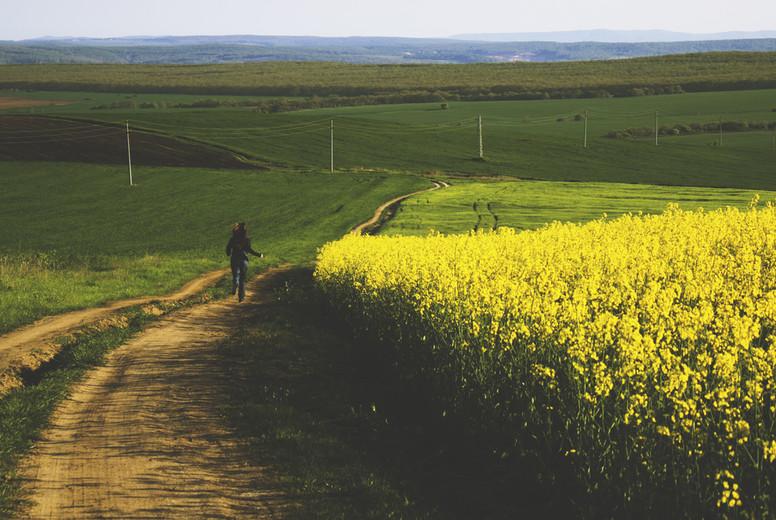 Girl running in a yellow field