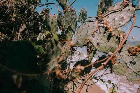 Cactus Plants 2