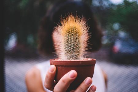 Cactus in Hand