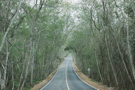 Road pass through the forest