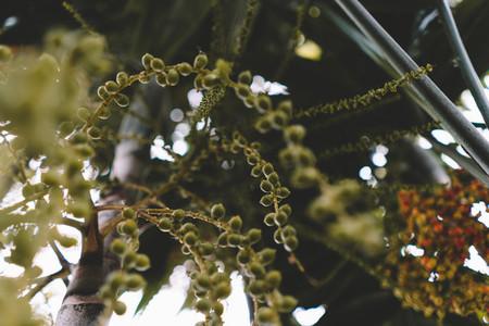 Green Botanical 3