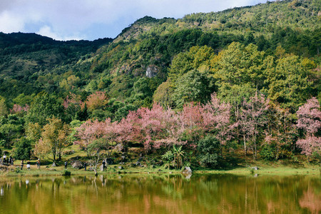 Mountain lake and blossoming