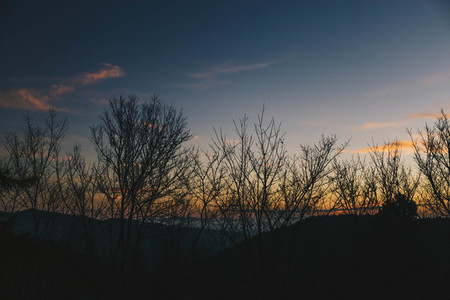 Tree silhouettes at sunset