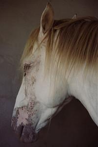 Horse 02