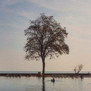 Pool with tree and sea view