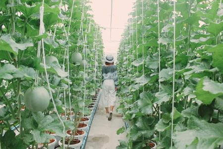 Melon farm 01